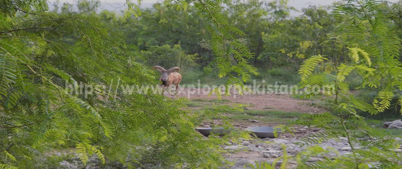 Manglot Wildlife Park,