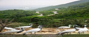 Margala national park