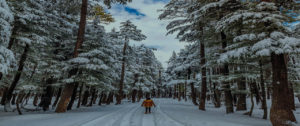 Usho Forest